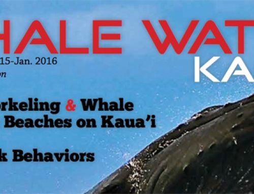 Kauai Whale Watch Magazine (Read Online)