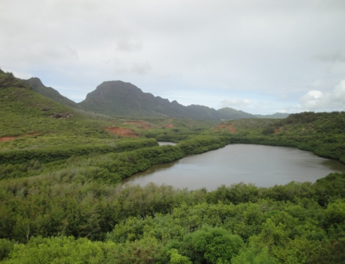 Group Gearing Up for 62-Acre Restoration of Hule'ia Watershed