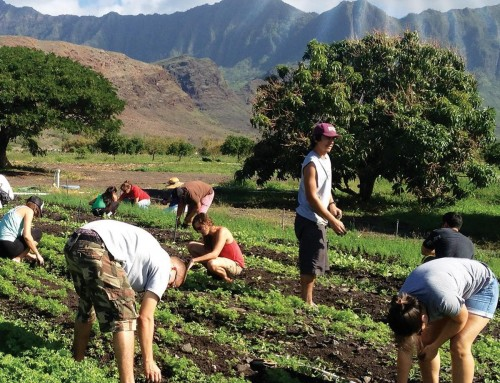 'Food and Power in Hawai'i: Visions of Food Democracy' Depicts Diverse Food Challenges