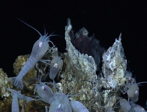UH: Biodiversity Loss from Deep-Sea Mining Unavoidable