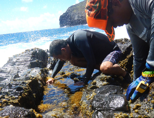 Scientists Return from Assessing 'Opihi Populations in Papahānaumokuākea