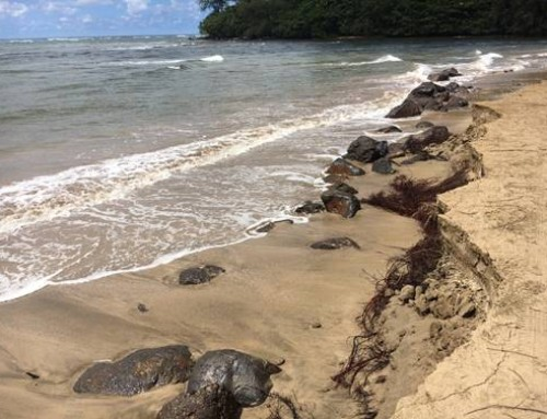 County Prohibits Cars on Black Pot Beach in Hanalei