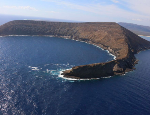 TV Special on Lehua Island Restoration Premieres Tonight