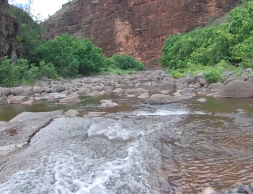 Waimea River Water Settlement Featured in Mini-Documentary (w/ video)