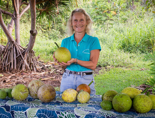 Breadfruit Workshop Highlights Benefits of Regenerative Agroforestry