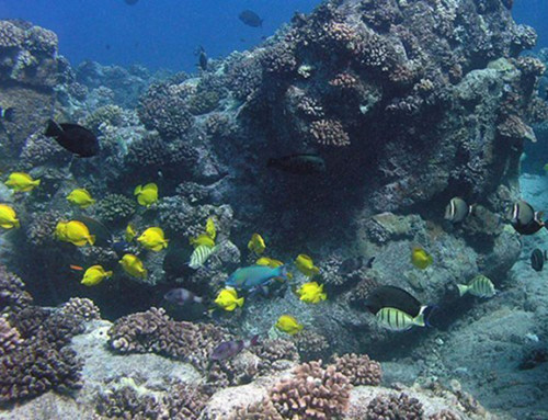 Study Highlights Opportunity to Restore Hawaiʻi's Reef Fisheries