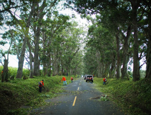 Tree Tunnel to Close for Maintenance Sunday
