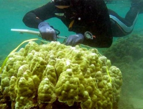 Scientists: Corals Adjusting to Warmer Climate, But Not Fast Enough