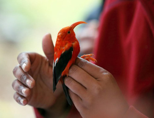 Tour Company Boosts Efforts to Save Endangered Birds