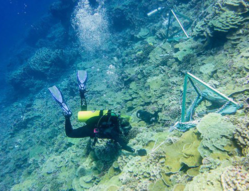 Coral Reef Bacteria Synchronize Changes Across Vast Distance