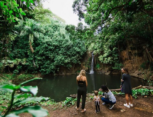 National Tropical Botanical Garden Unveils New Waterfall and Cultural Tour